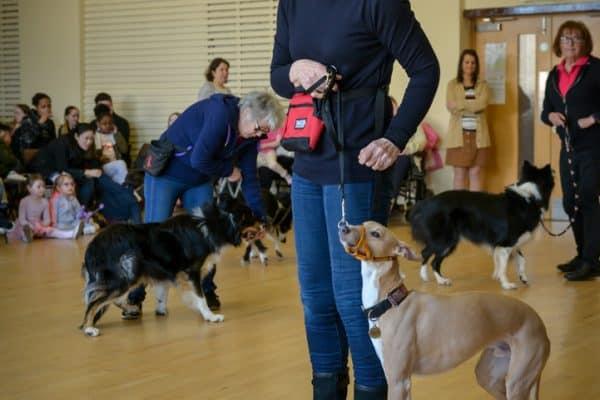Knightswood Dog Training Club